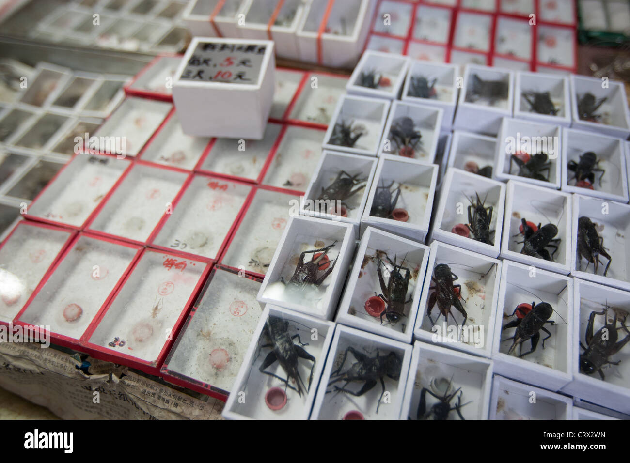 Crickets on sale at the Insect and Bird market, in Shanghai, China - Stock Image