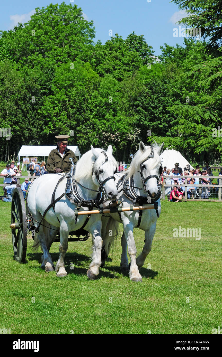 Two Percheron horses pulling World War I water carrier. Display at the Weald And Downland Open Air Museum Singleton. - Stock Image