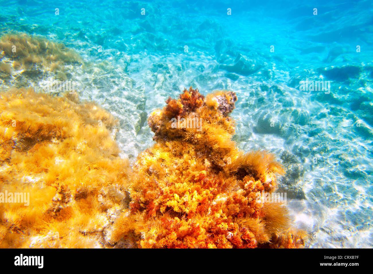 Baearic islands underwater sea bottom snorkeling view - Stock Image