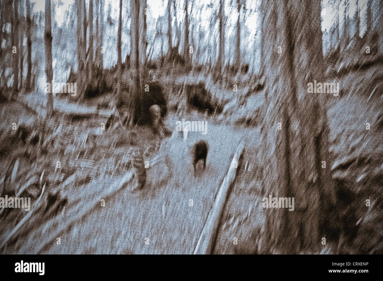 Hiker with dog jogging down trail in the Tongass National Forest, Alaska, USA - Stock Image