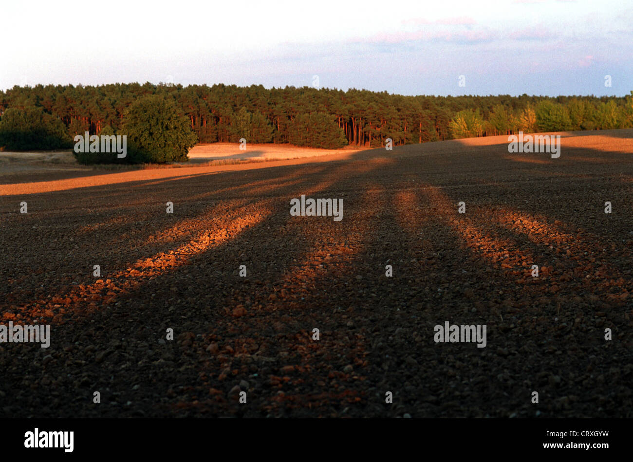 Nature Reserve High Flaeming - Stock Image