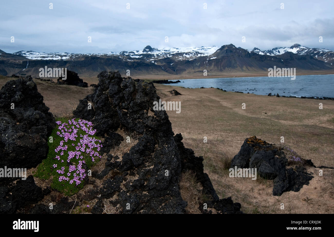 Lava fields Budahraun at Budir, Snaefellsnes Peninsula, Iceland, Polar Regions - Stock Image