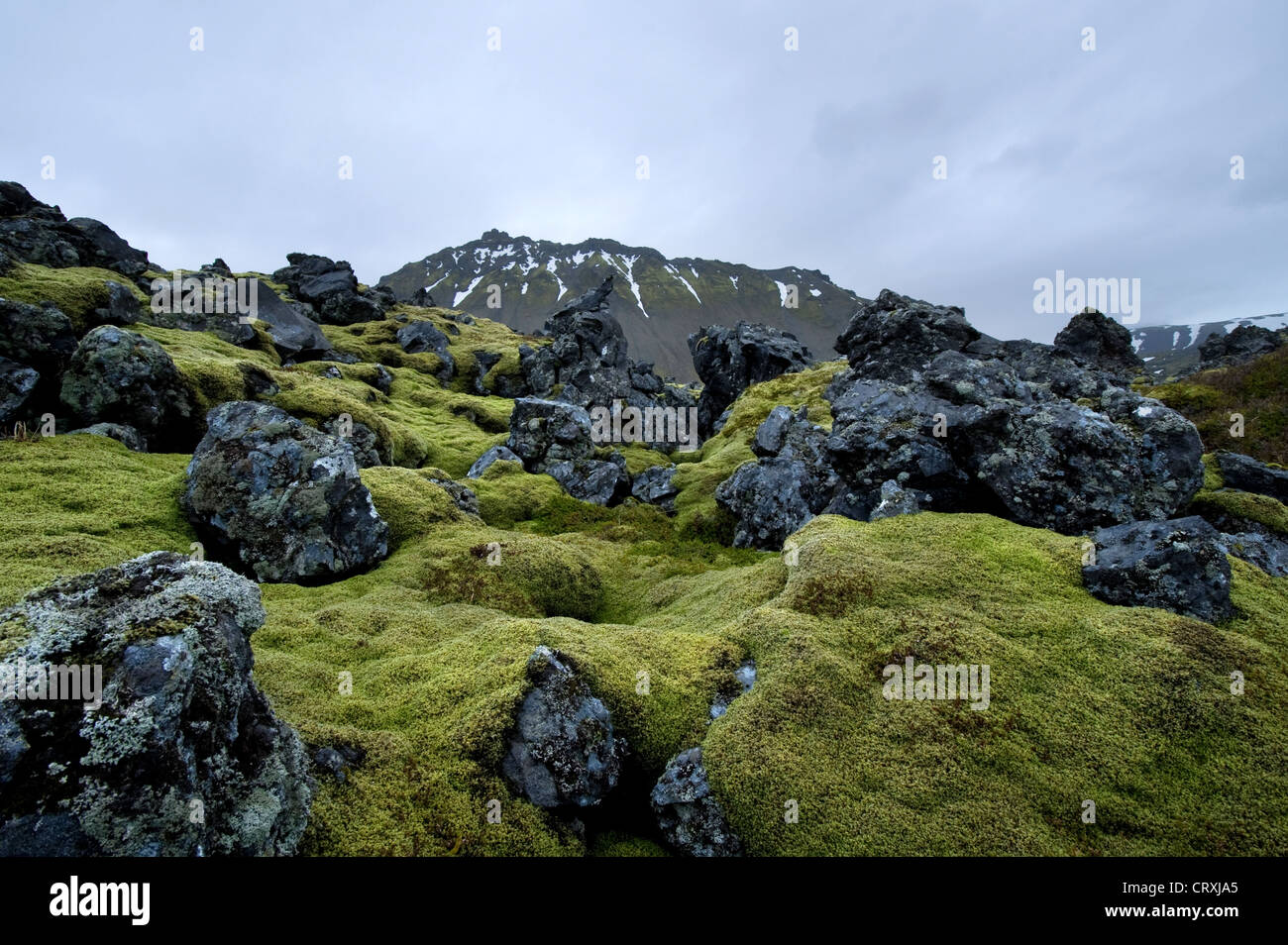 Lava fields, Snaefellsnes Peninsula, Iceland, Polar Regions - Stock Image