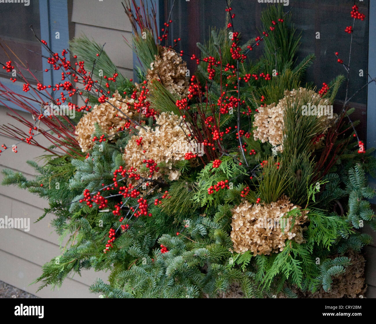 Autumn window evergreens berries hydrangeas Mulberry Street Interior Design and Northwoods Decor Shop. Cable Wisconsin - Stock Image