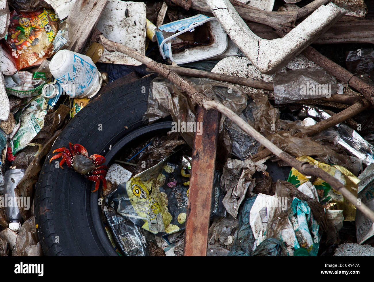Guanabara Bay Crab insists on surviving on the garbage in a former mangrove beside Rio de Janeiro International - Stock Image