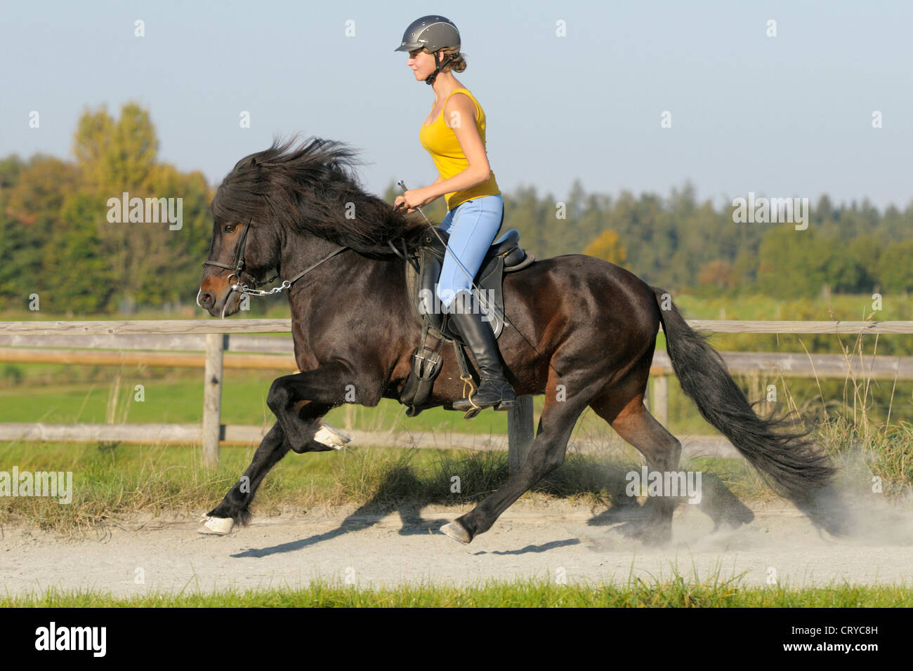 to wear - Horse Icelandic riding pictures video
