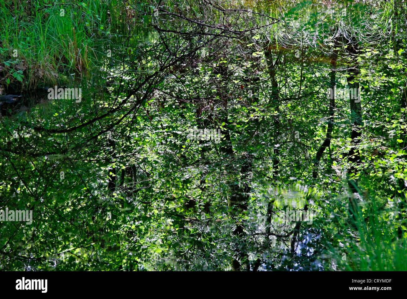 natural reserve area of magadino ponds on magadino plain - canton of ticino - switzerland - Stock Image