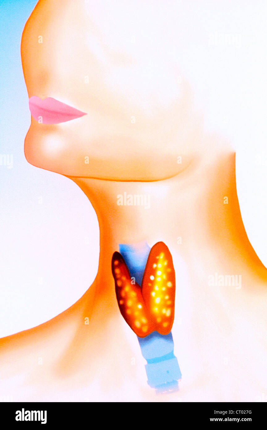 THYROID, ILLUSTRATION Stock Photo