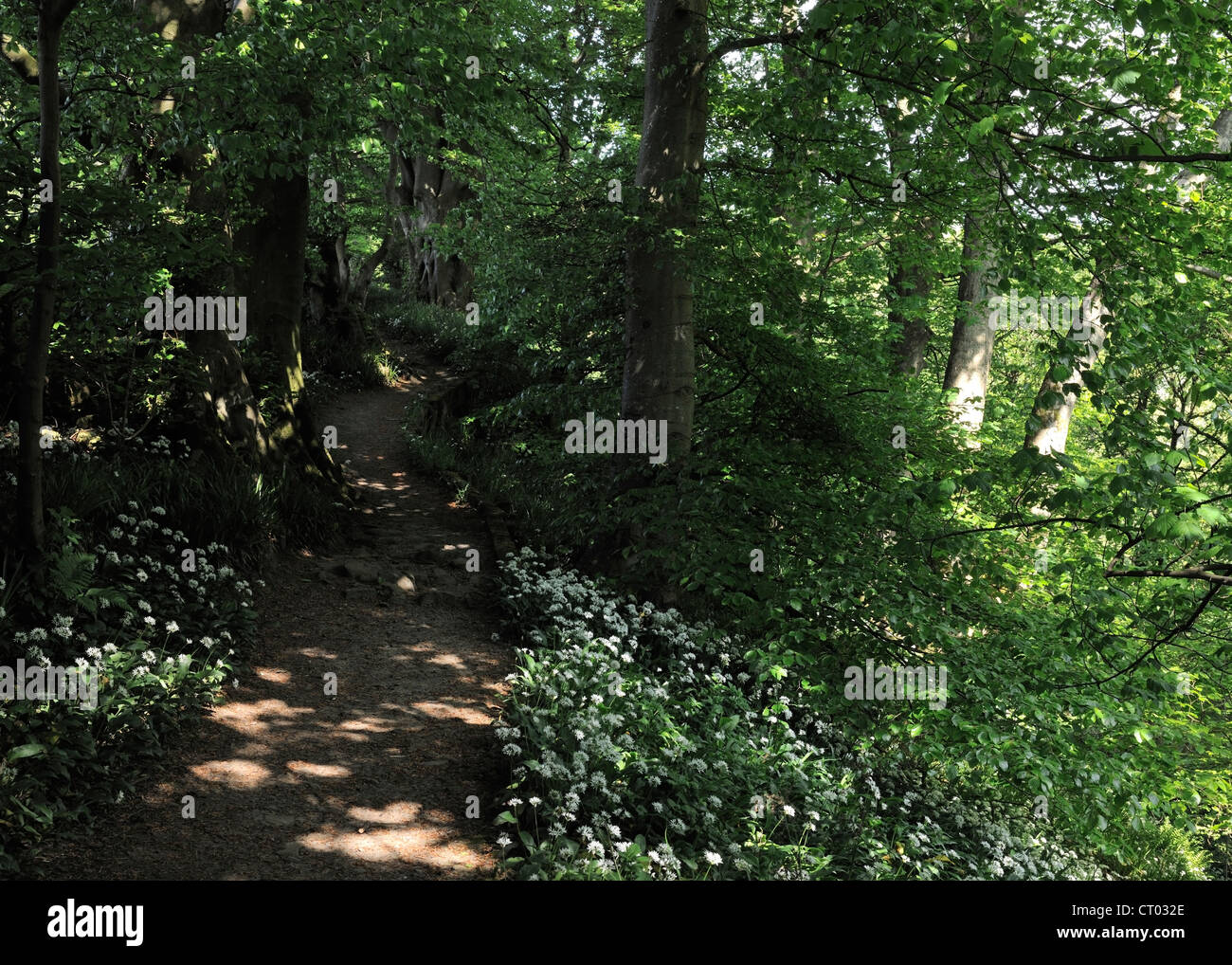 Dappled light in Mill Gill wood, Askrigg, Wensleydale, England - Stock Image