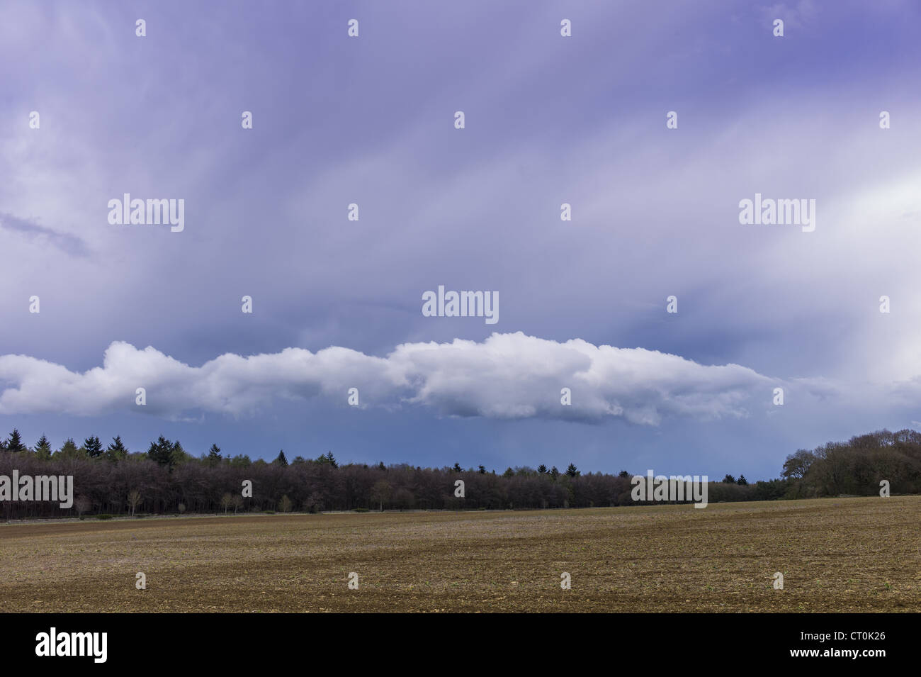 Cloud formation Stratocumulus above trees with Cirrus high above in springtime in Swinbrook in the Cotswolds, Oxfordshire, - Stock Image