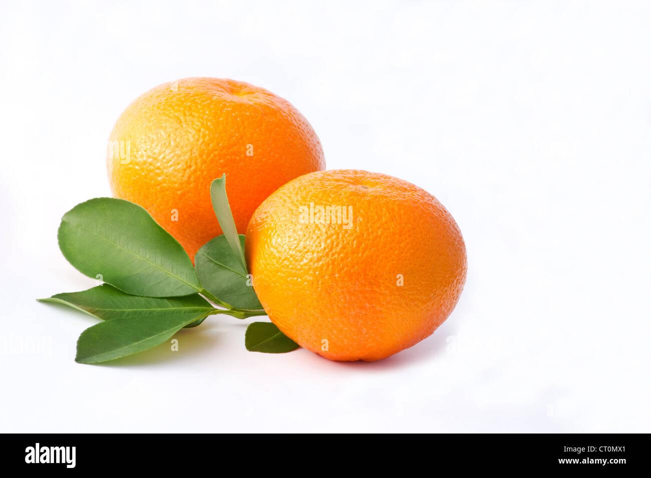 Fresh oranges clementine ((Citrus reticulata) on white background - Stock Image
