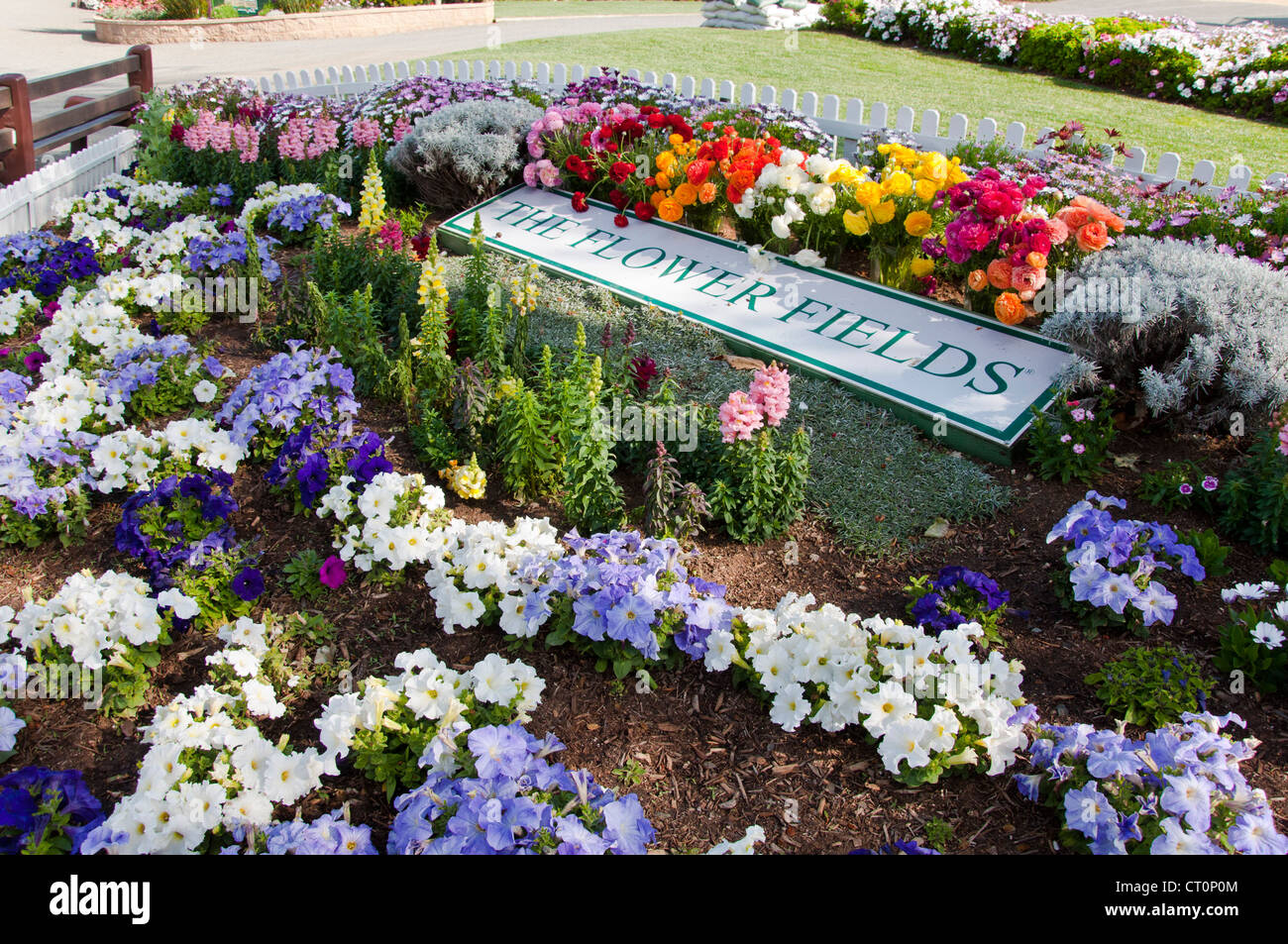 Charmant Garden With Mixed Flowers, Flower Fields, Carlsbad, California, USA   Stock  Image