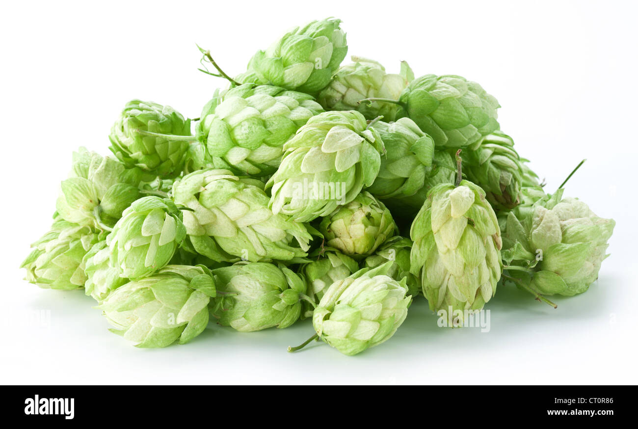 branch of hops on a white background - Stock Image