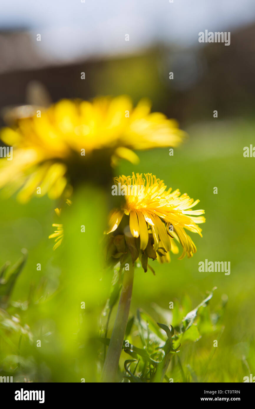 Close up of flowers growing in field Stock Photo