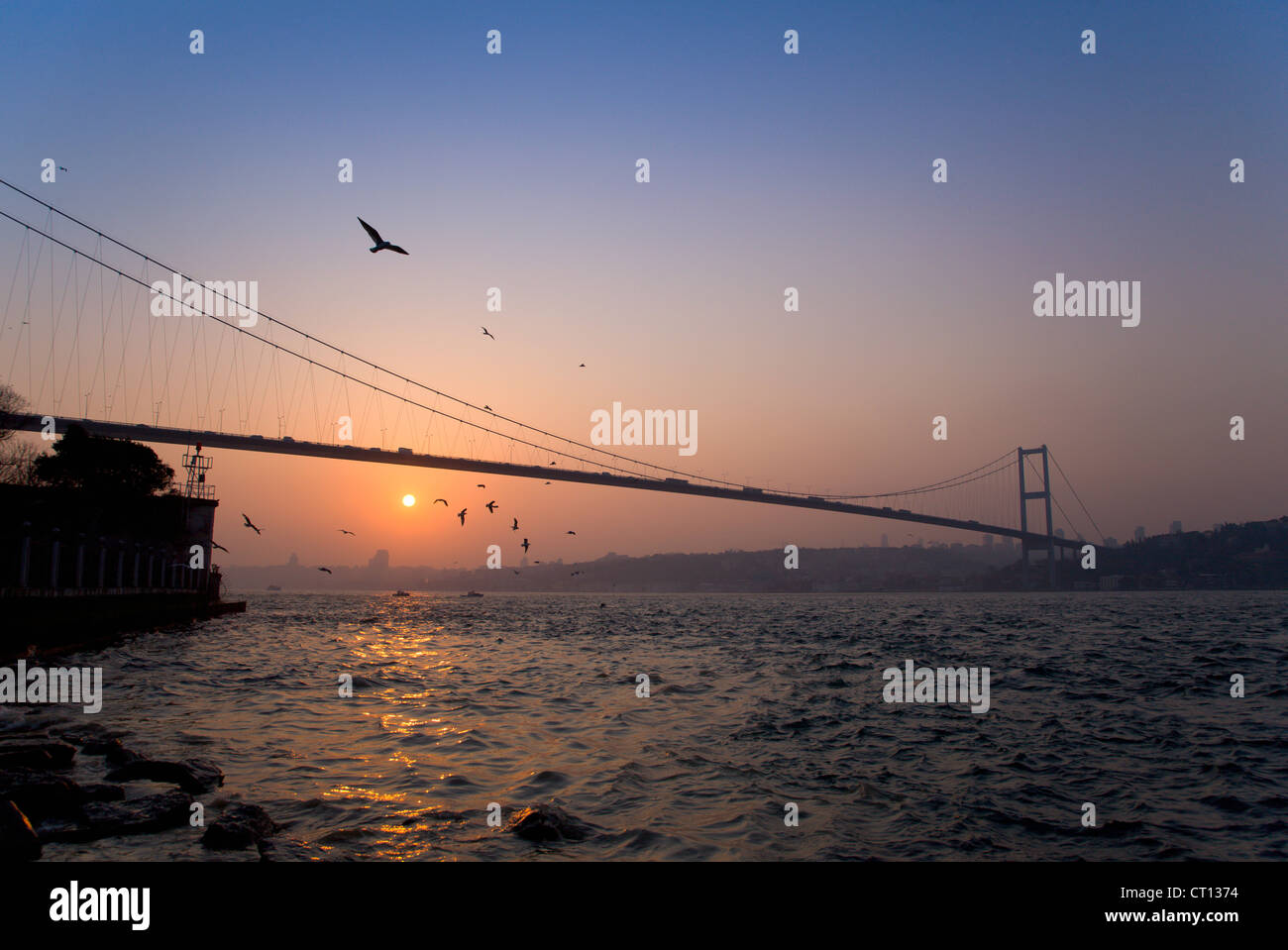 Birds flying over bridge on urban bay - Stock Image