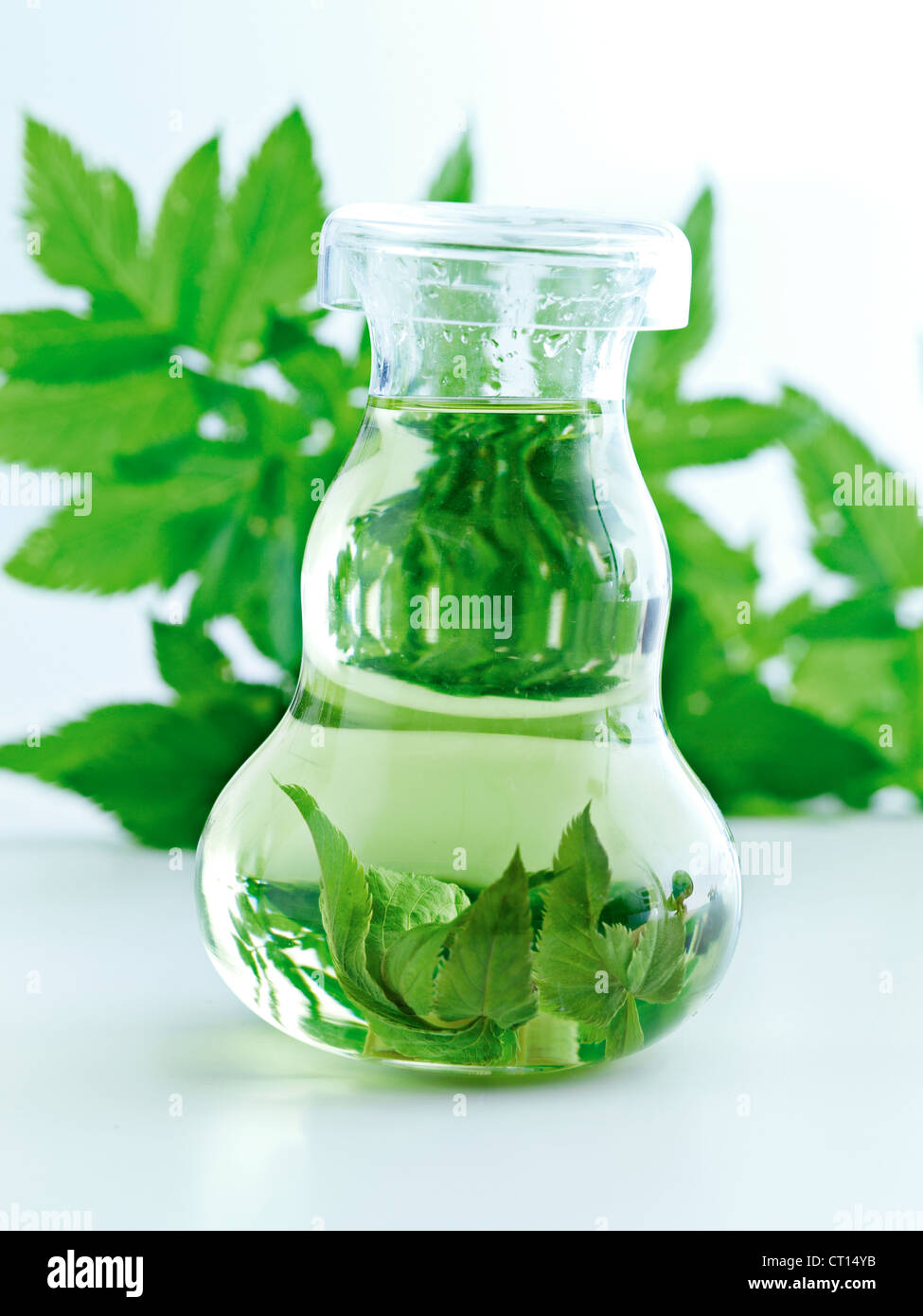 Bottle of herbs in water - Stock Image