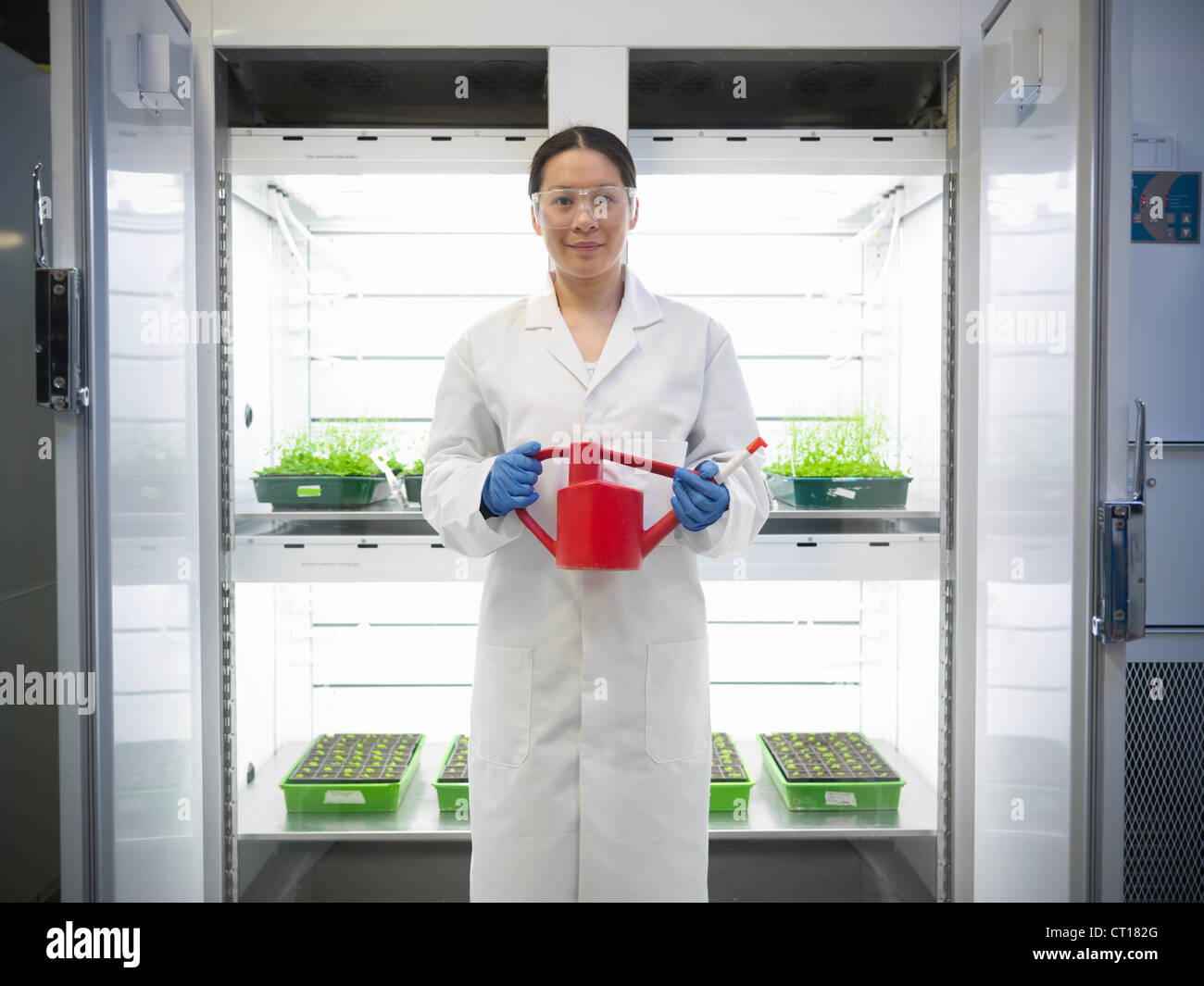 Scientist watering plants in container - Stock Image