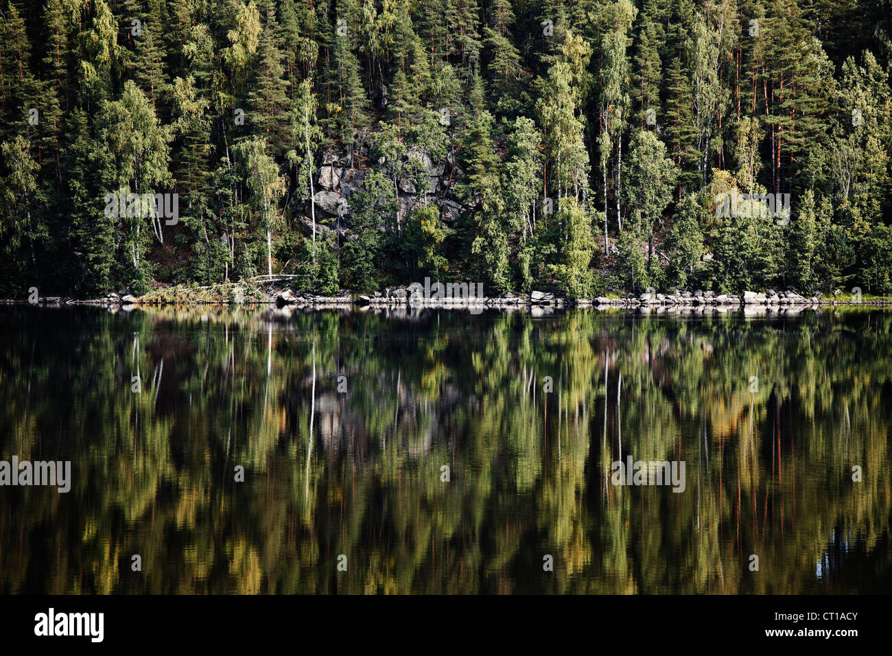 Forest reflected in still lake - Stock Image