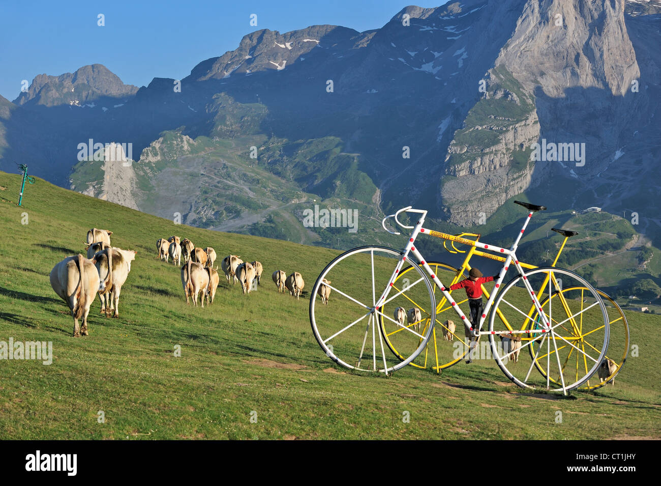 Herd of cows on mountain pasture and giant bicycle sculptures at the Col d'Aubisque, Pyrénées-Atlantiques, - Stock Image