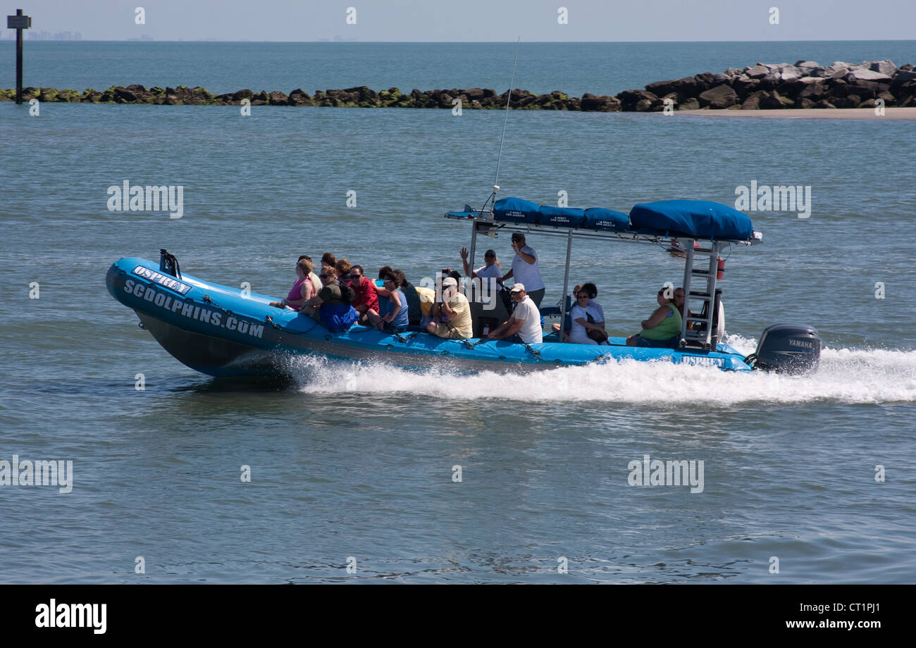 Dolphin Watching Boat - Stock Image