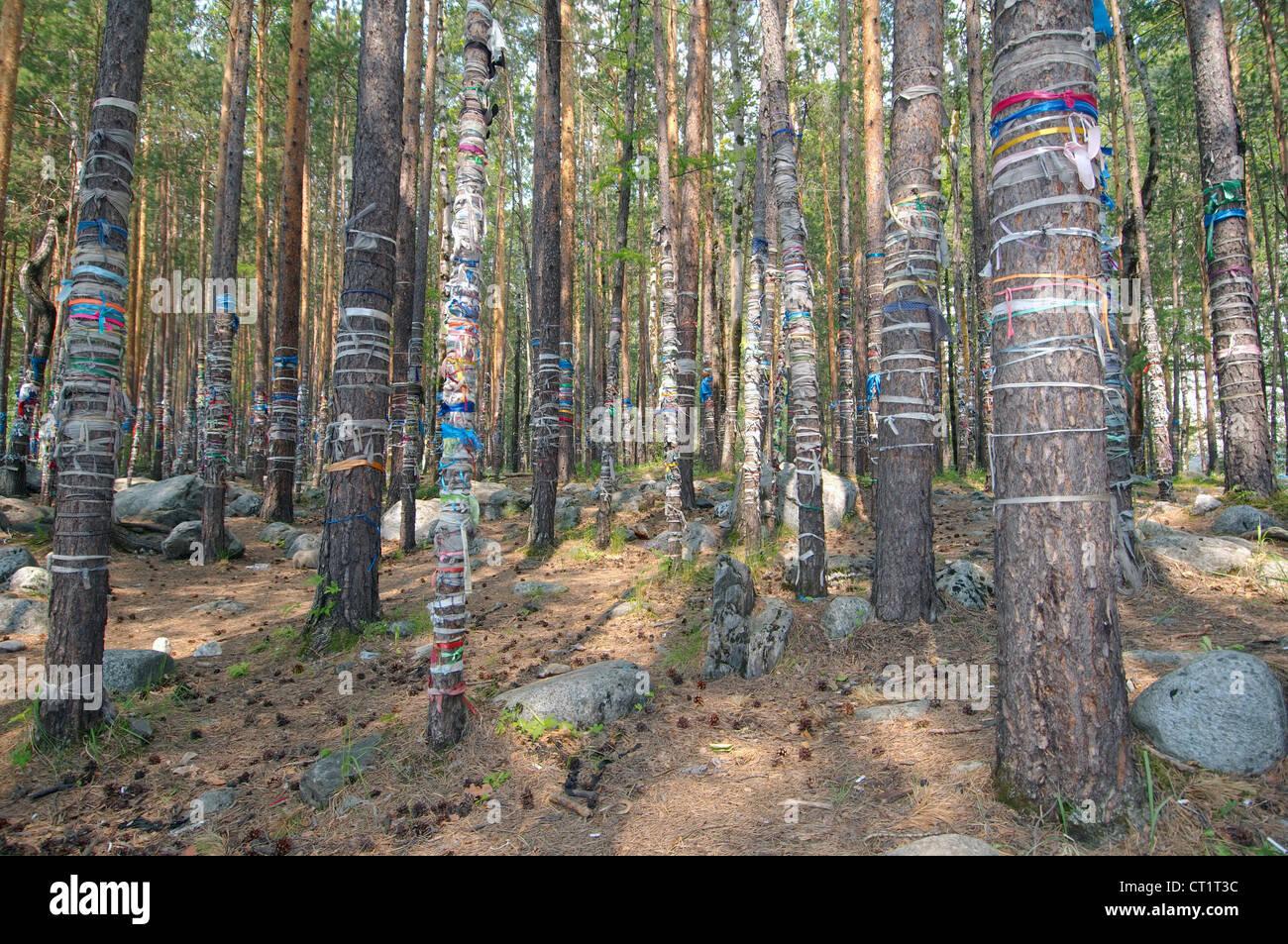 the sacred grove, Arshan, Tunkinsky District, Republic of Buryatia, Siberia, Russian Federation - Stock Image