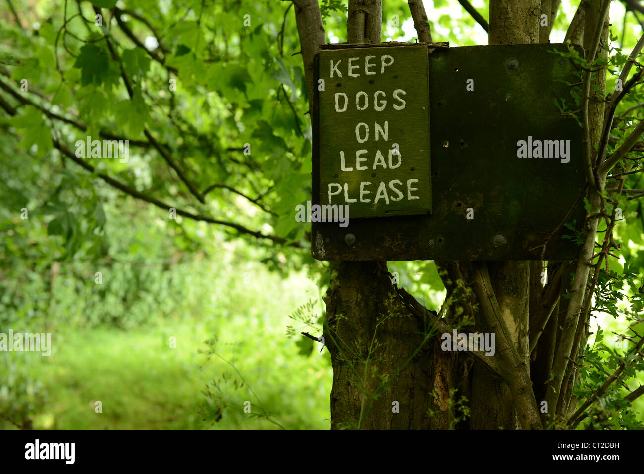 Keep dogs on lead. Signpost on a sheep farm - Stock Image