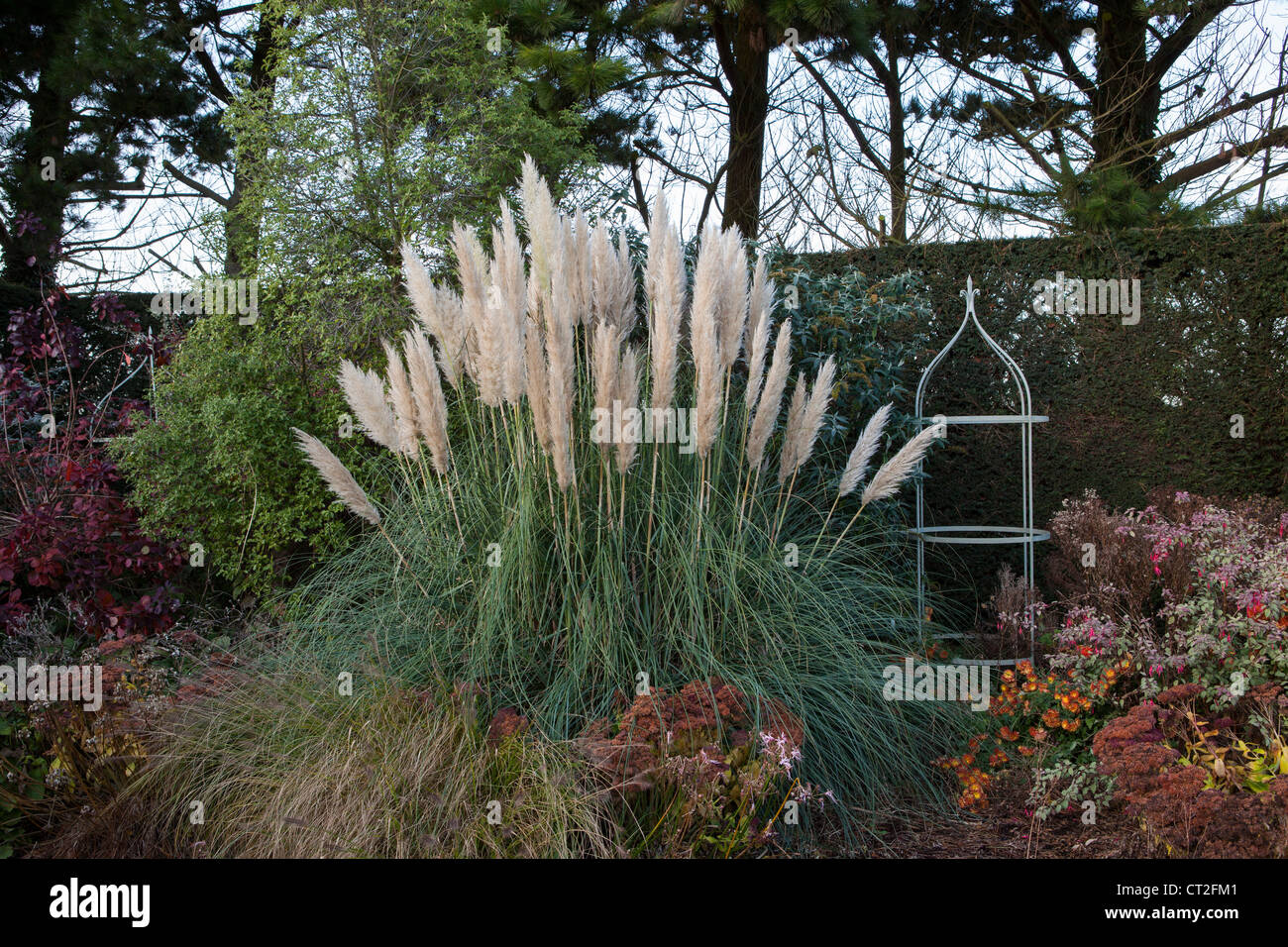 East Ruston Old Vicarage Gardens, Norfolk, Winter (Alan Gray and Graham Robeson). Pampass grass - Stock Image