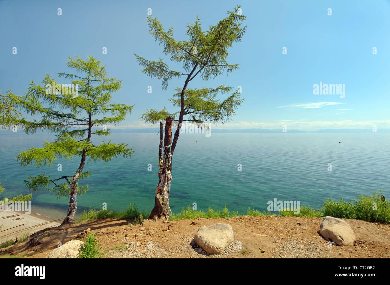 Tree of desires, settlement Listvyanka, Lake Baikal, Irkutsk region, Siberia, Russian Federation - Stock Image