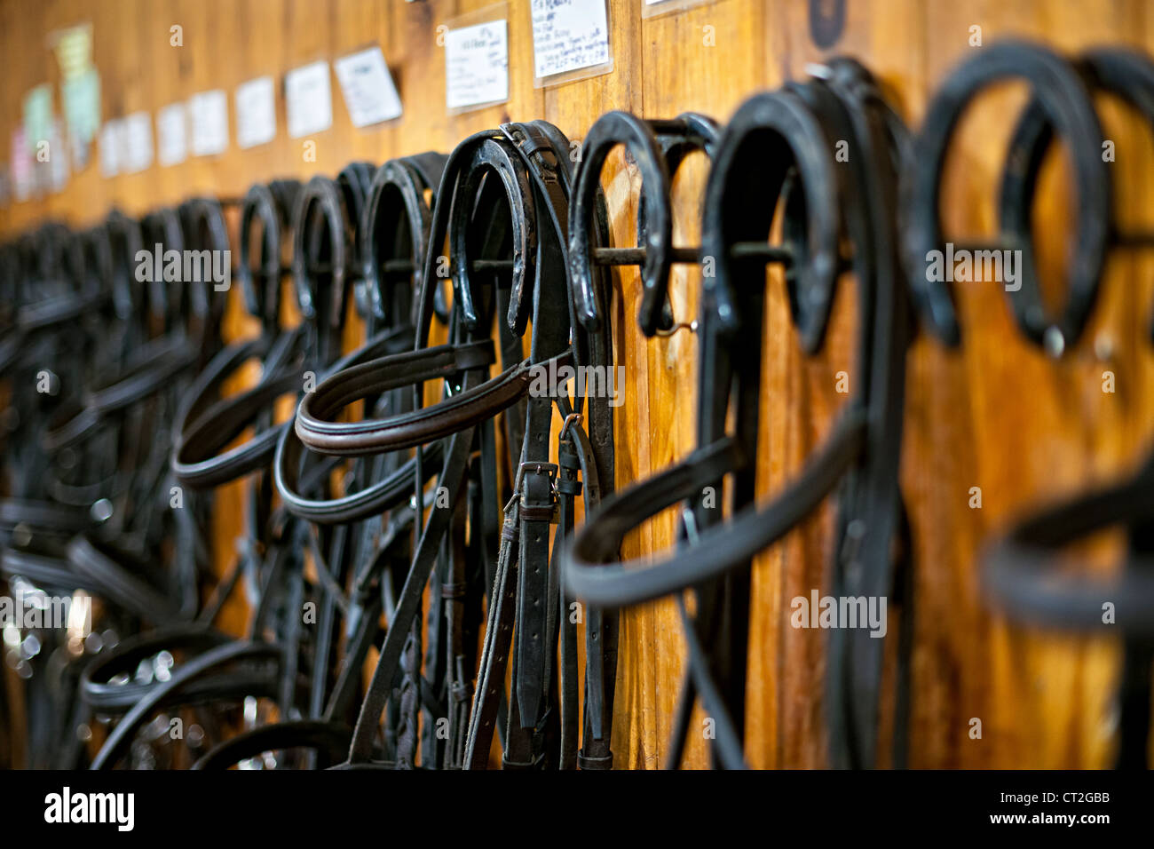 Leather horse bridles and bits hanging on wall of stable - Stock Image