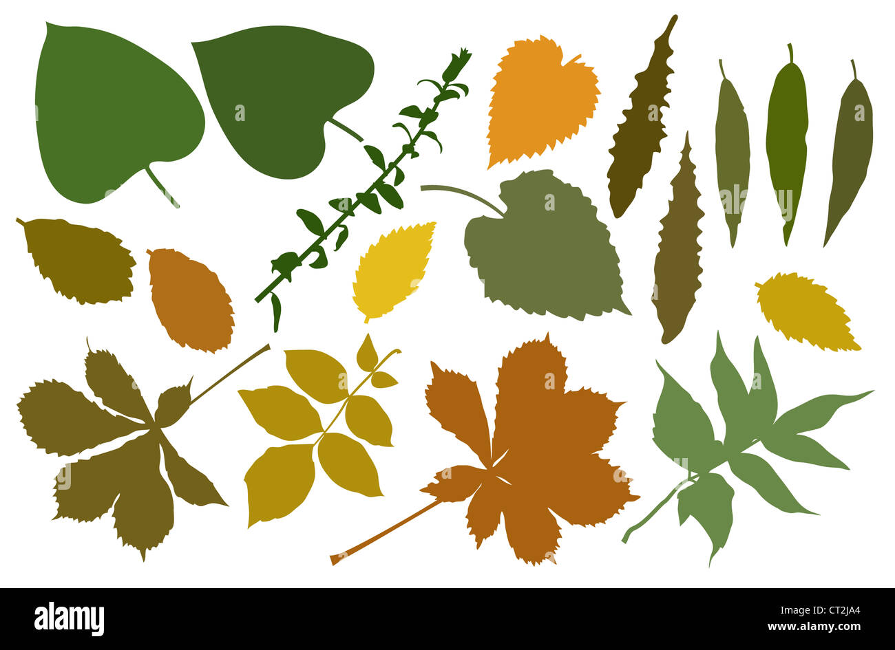 The color silhouettes of leafs Stock Photo