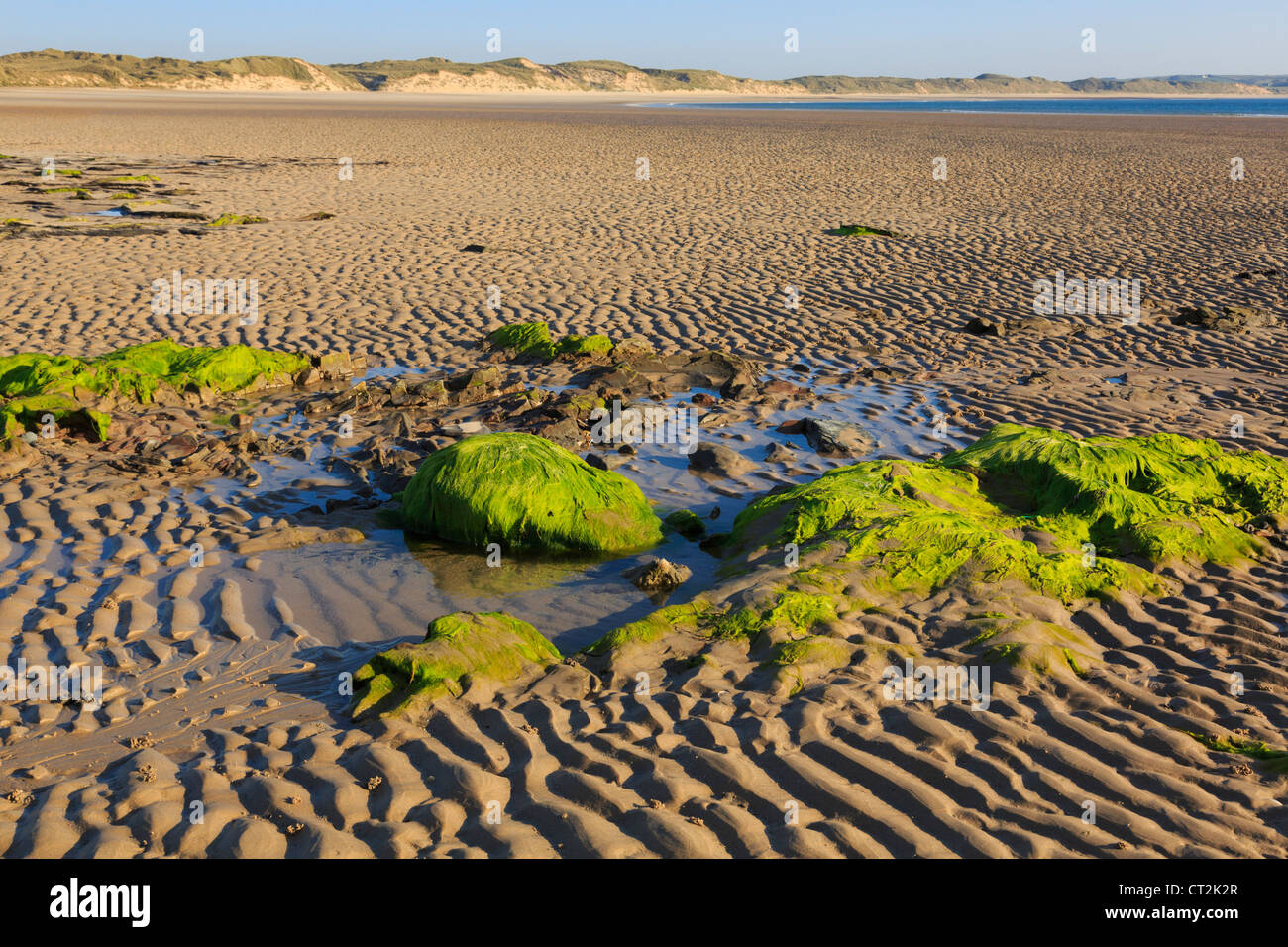 Mossy rocks in the rippled sand on the beach in Dunnet Bay at low tide in the evening at Dunnet Caithness Scotland - Stock Image