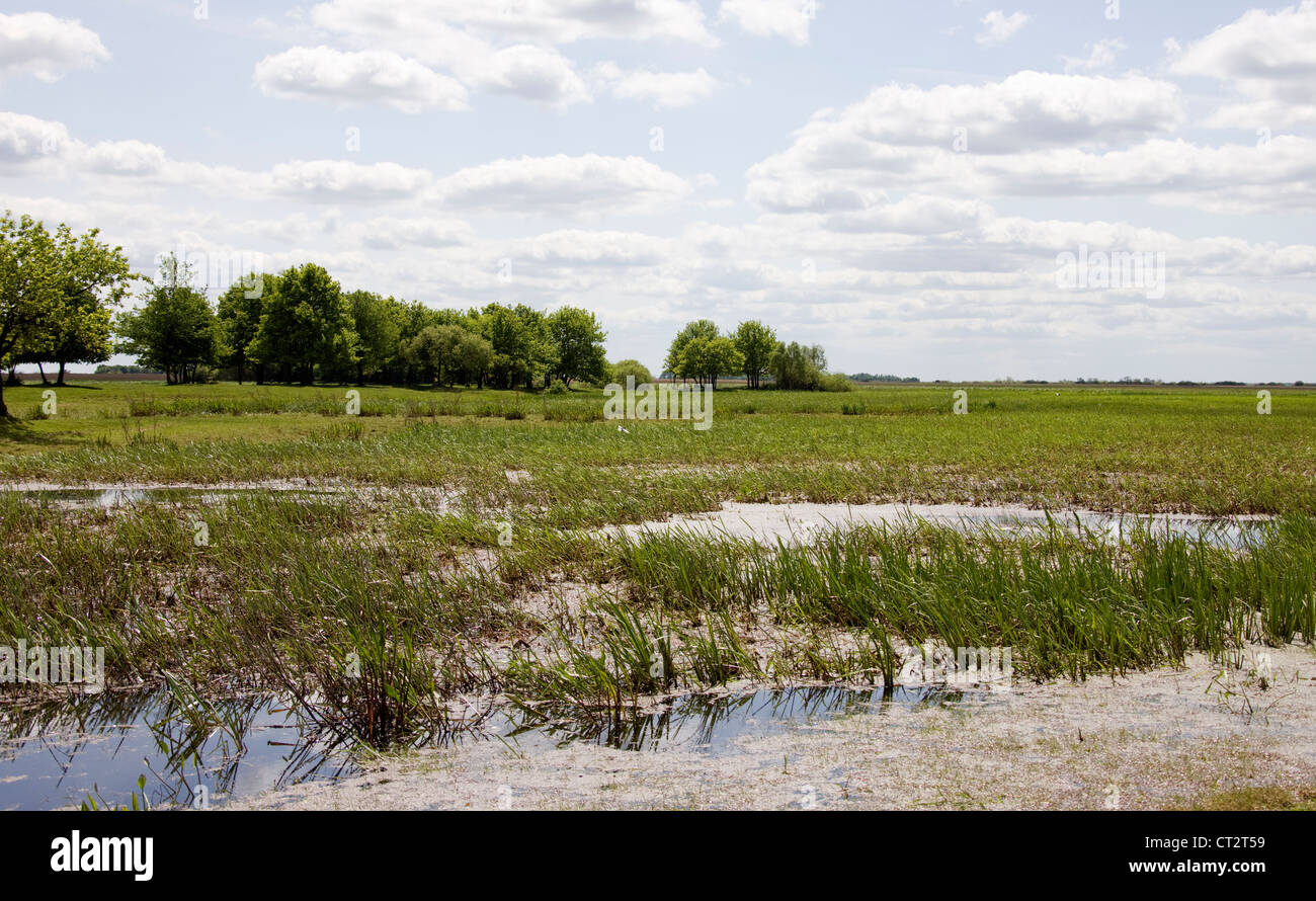 Area of marshes being used by White-winged Black Terns  (Chlidonias leucopterus) - Stock Image