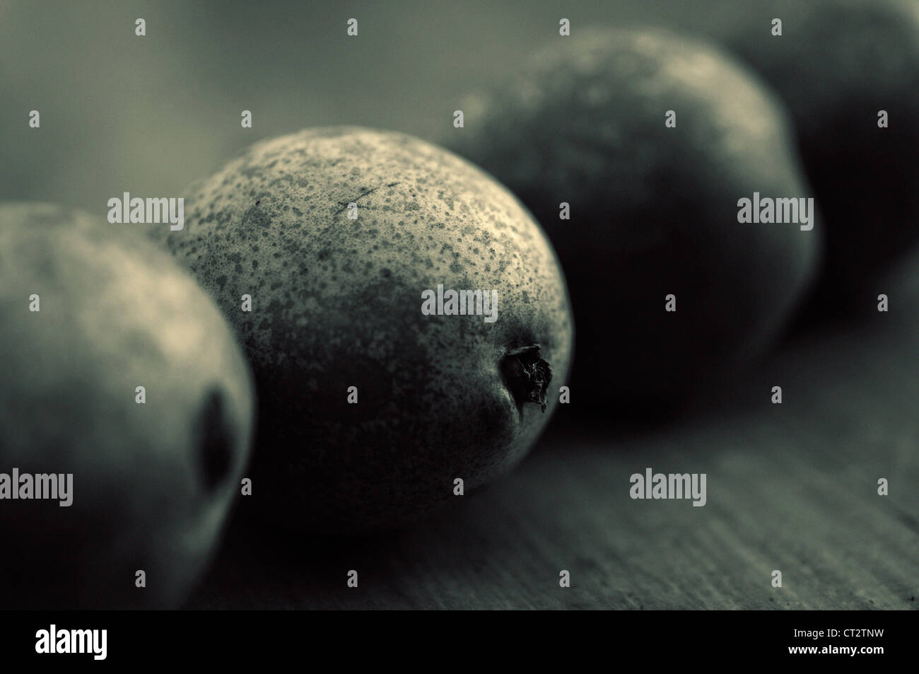 Pyrus communis 'Conference', Pear - Stock Image