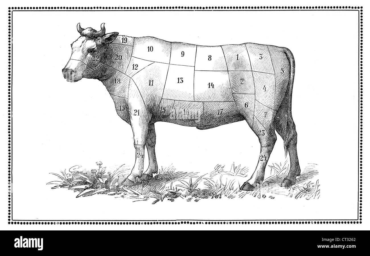 Butcher Chart Stock Photos & Butcher Chart Stock Images - Alamy