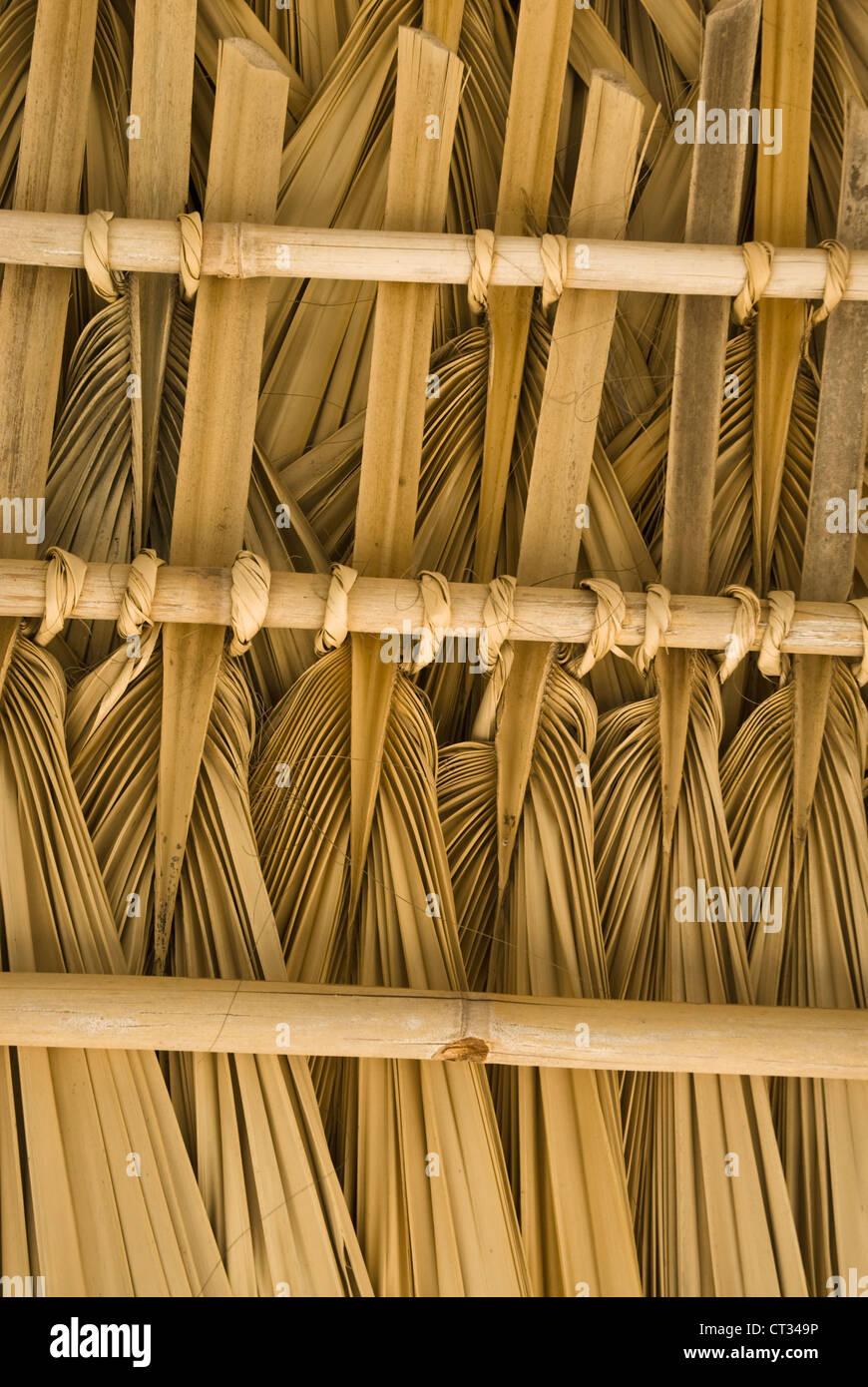 Cocos nucifera, Coconut palm - Stock Image