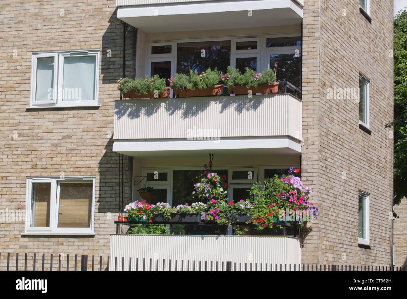 Apartments, flats, London. Colourful planted window boxes on adjacent balconies. Stoke Newington. - Stock Image