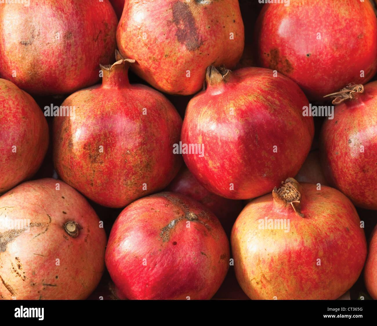 Punica, Pomegranate - Stock Image