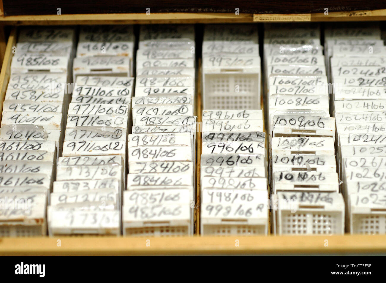 An array of microscope slides about to be examined for any signs of pathology. - Stock Image