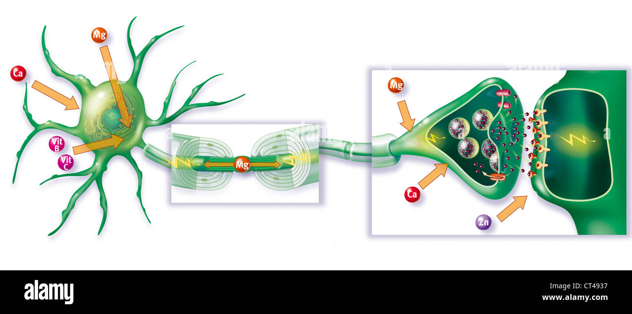 NERVE IMPULSE, DRAWING - Stock Image