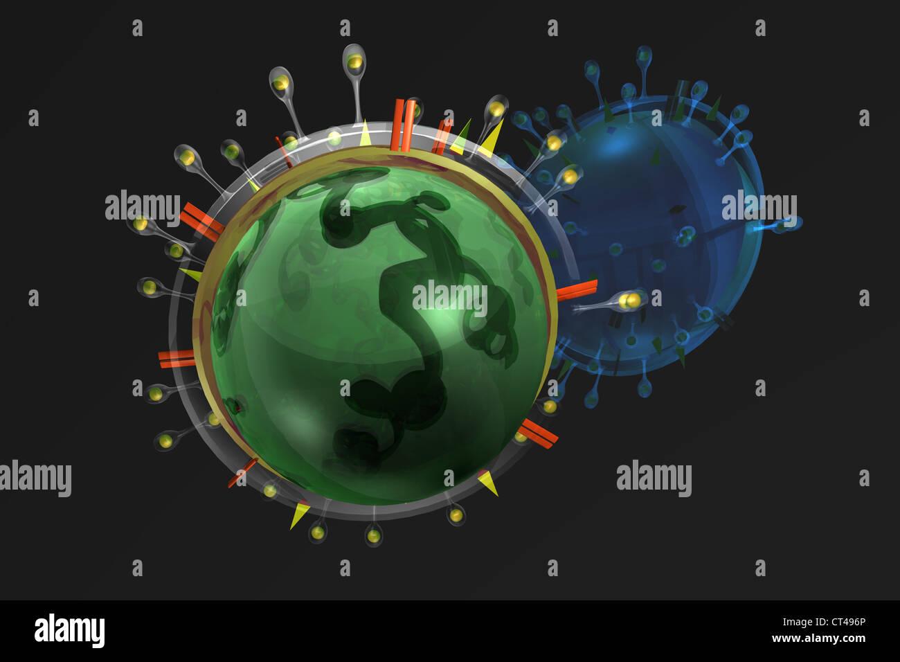 AVIAN INFLUENZA VIRUS - Stock Image
