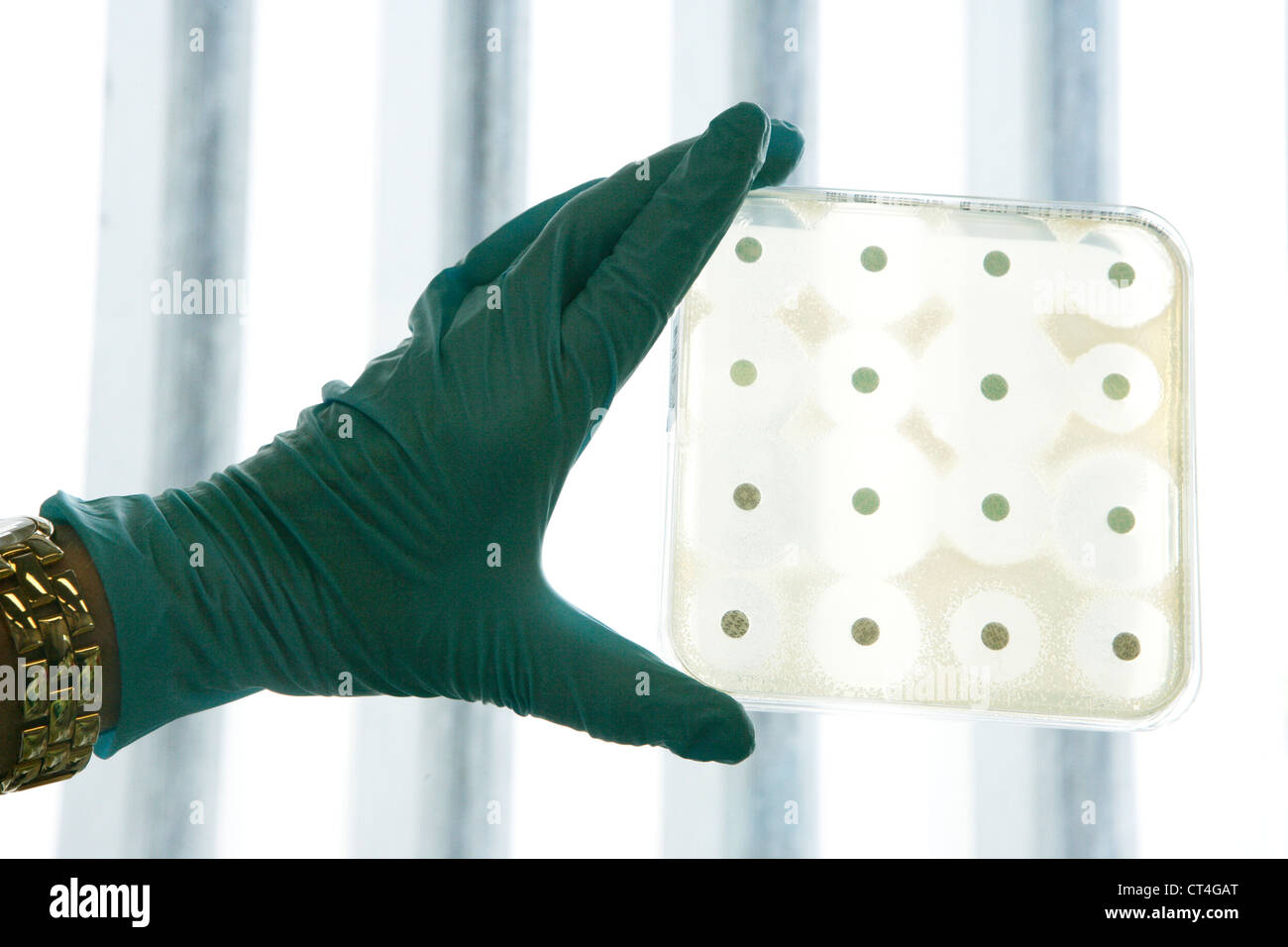 ANTIMICROB. SUSCEPTIBILITY TEST - Stock Image