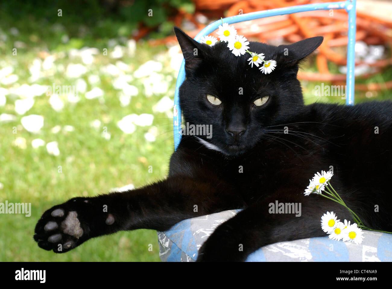 EUROPEAN CAT - Stock Image