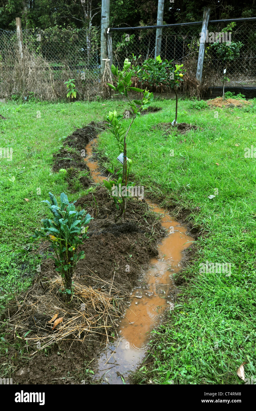 Permaculture swale drain water distribution garden - Stock Image