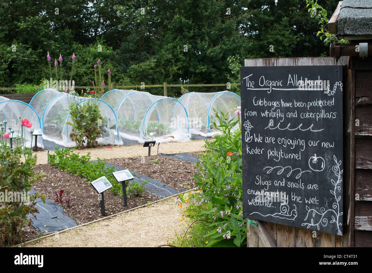 Vegetable allotment at Ryton Organic gardens , Warwickshire, England - Stock Image