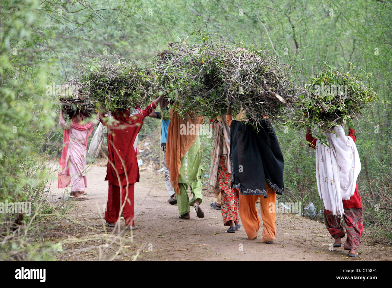 Women carrying collected firewood on her heads, Uttar Pradesh, India - Stock Image