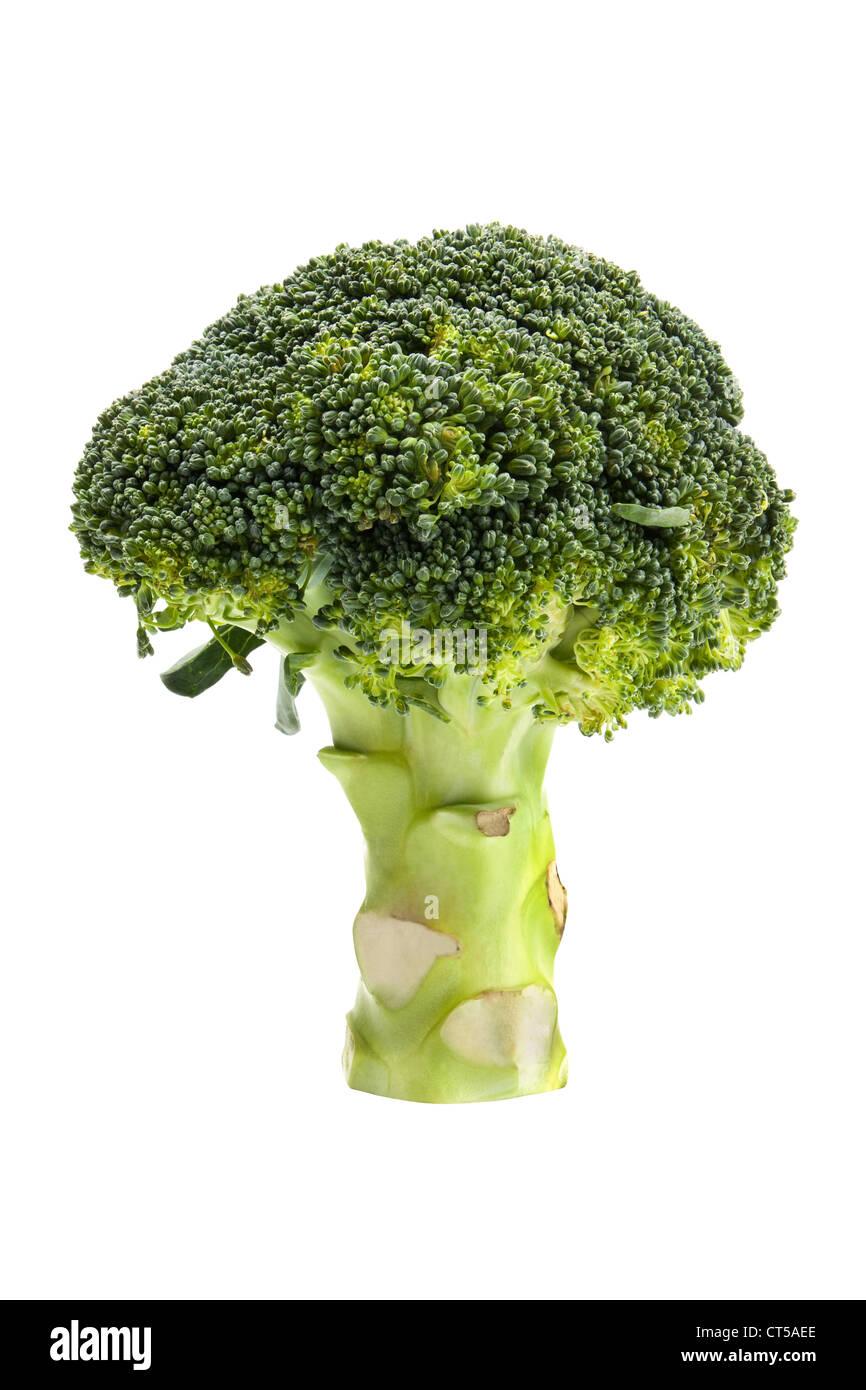 Fresh broccoli isolated on white background. Stock Photo