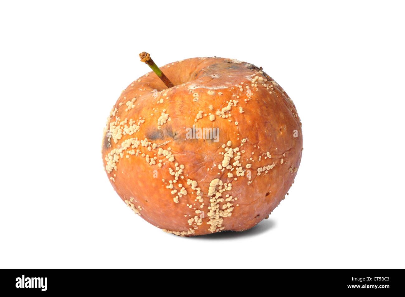 Macro of rotten apple isolated on white background - Stock Image