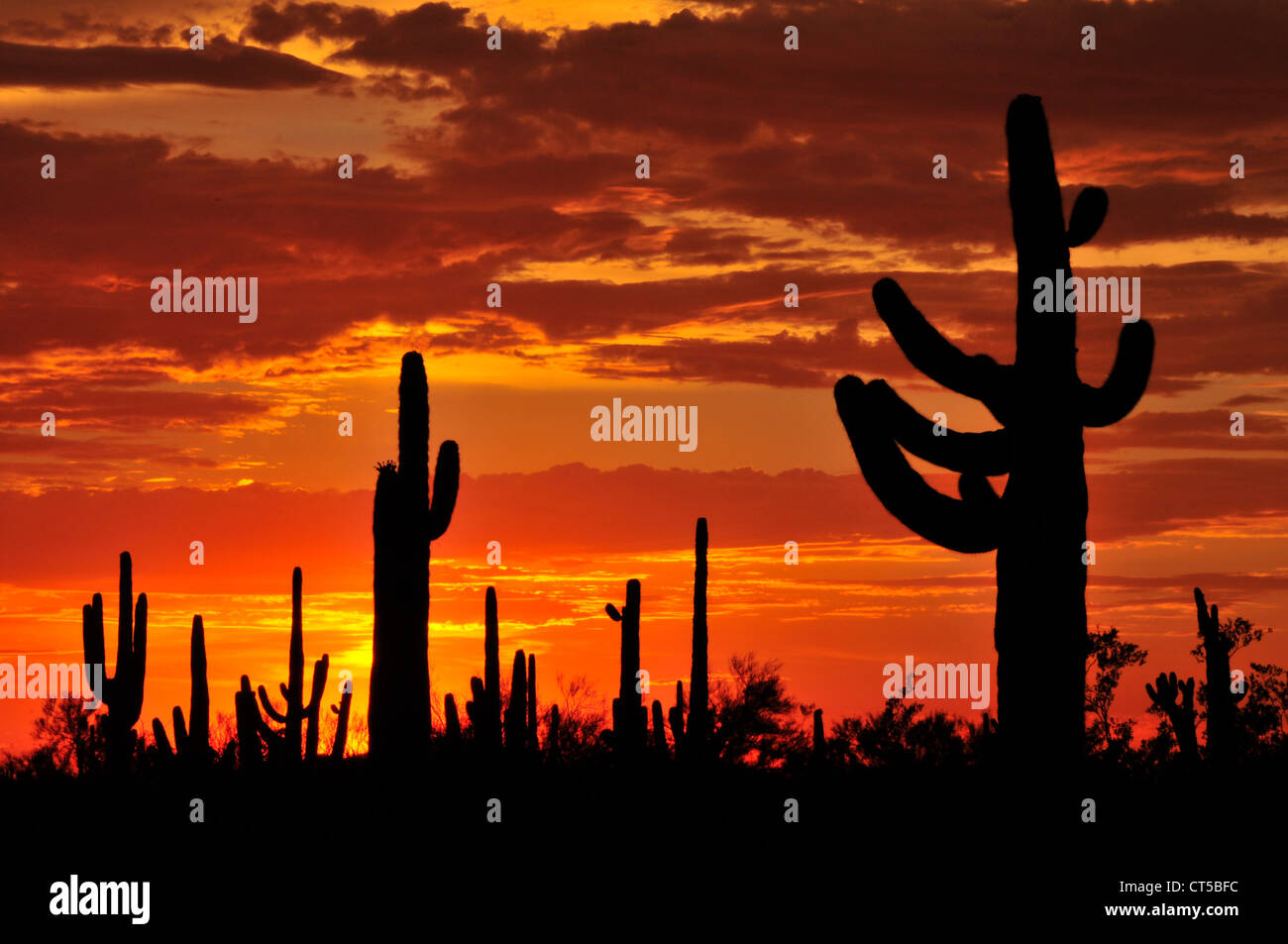 Ironwood Forest National Monument at sunset in the Sonoran Desert near Eloy, Arizona, USA. - Stock Image