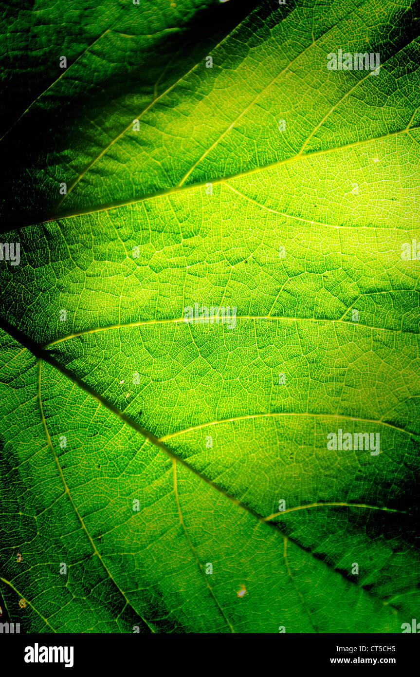 Green leaf background macro texture with space for text or image. - Stock Image