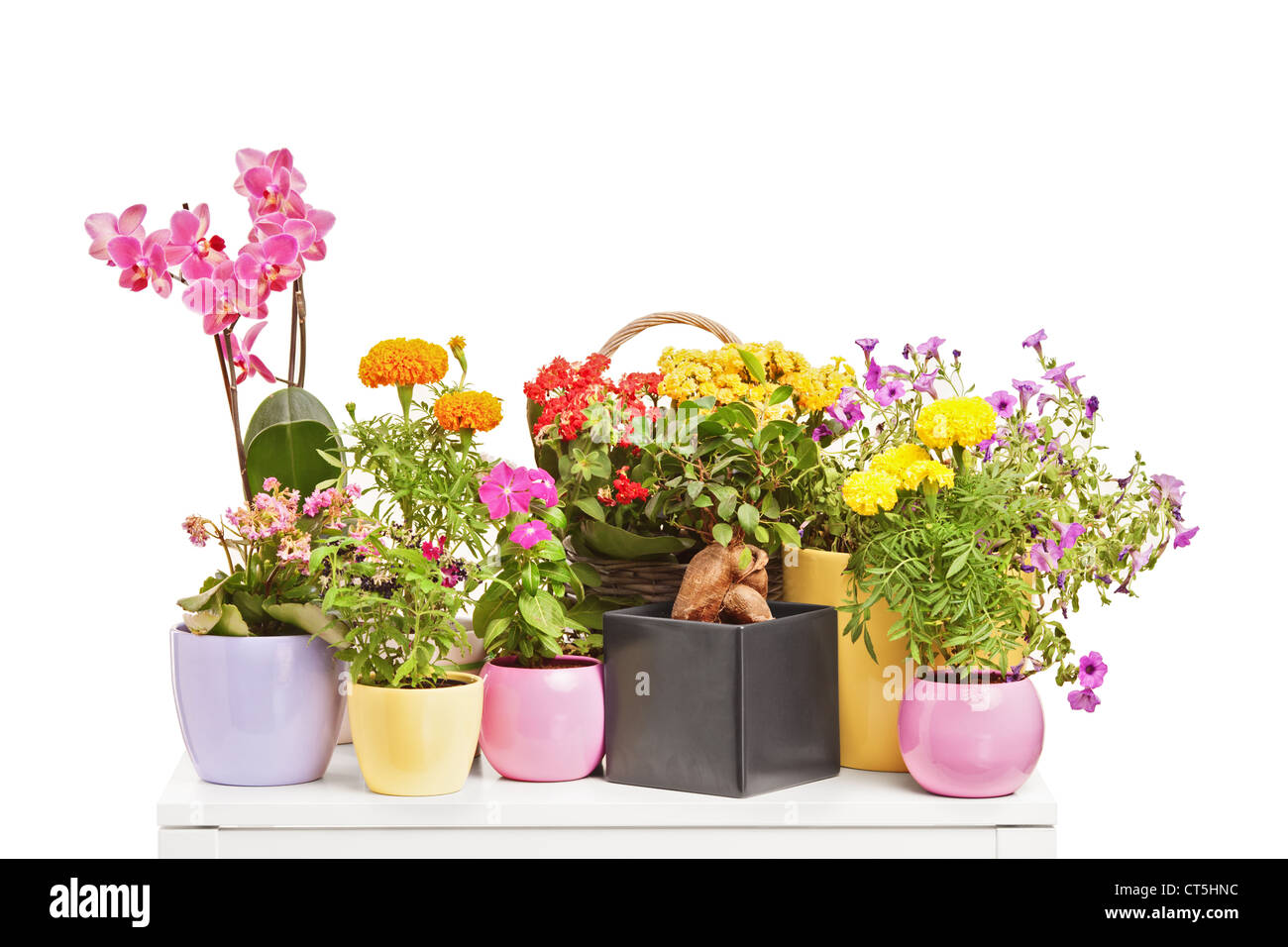 Types Of Flowers Stock Photos Types Of Flowers Stock Images Alamy